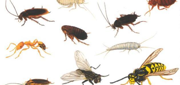 شركة مكافحة حشرات دبي