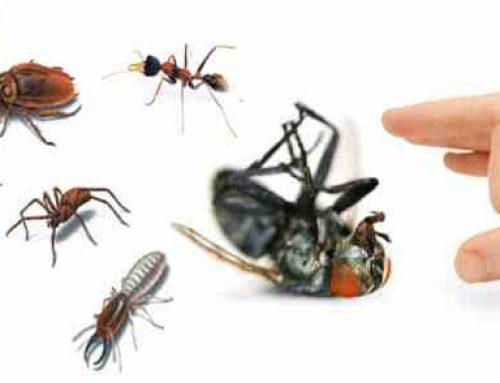 شركة مكافحة حشرات راس الخيمة |0503832348 |ابادة الحشرات