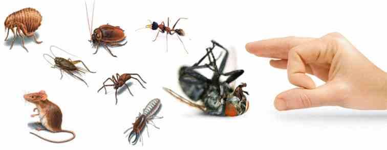 شركة مكافحة حشرات راس الخيمة